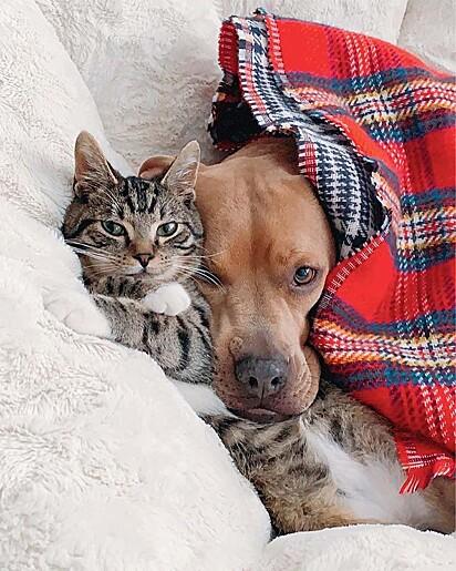 Nada melhor que se aquecer ao lado de quem amamos.