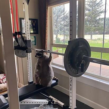 Aqui é body bodybuilder.