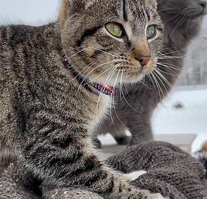 O gatinho Ernest.