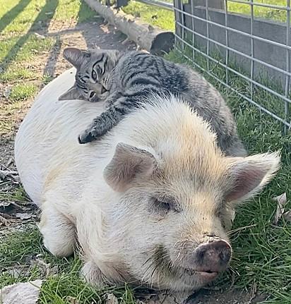 A amizade permite um forte abraço.