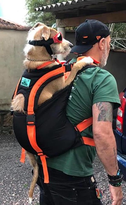 Osvaldo partindo para uma aventura com o dono.