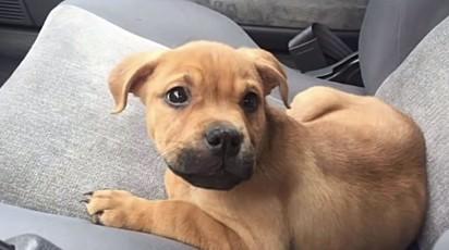 O cachorrinho Kuvo, quando filhote.
