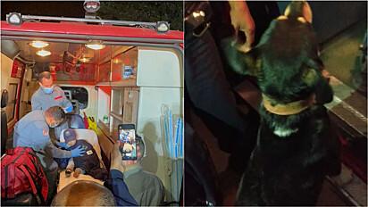 Criança desaparecida é resgatada por Guarda Municipal graças a ajuda do cachorro da família.