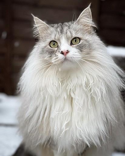 O gatinho Milo.