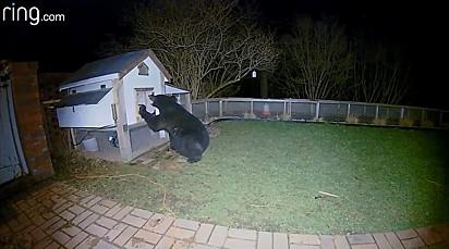 O urso deu várias investidas, mas por sorte nenhuma deu certo.