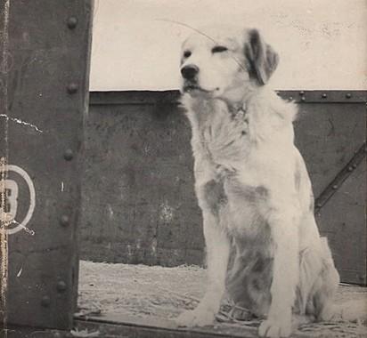 O cachorrinho Lampo.