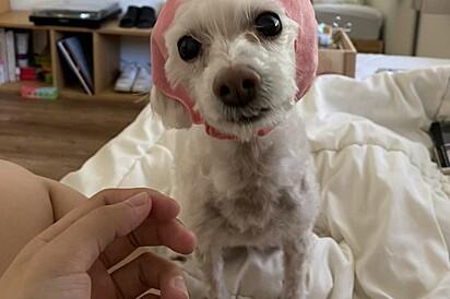 A cachorrinha Ellie.