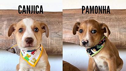 Estudante dá nomes de comidas caipiras para filhotes encontrados em interior de São Paulo, com o objetivo de incentivar adoções.