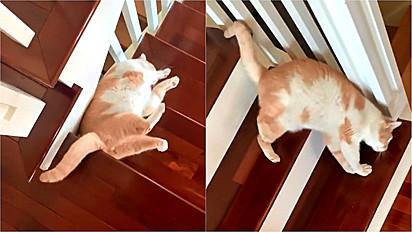 Gatinho tem um estranho hábito para descer as escadas.