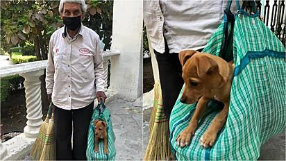 Idoso vende vassouras na companhia do seu vira-lata caramelo que resgatou das ruas.