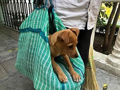 O cachorrinho Chiquito (Pequeno).