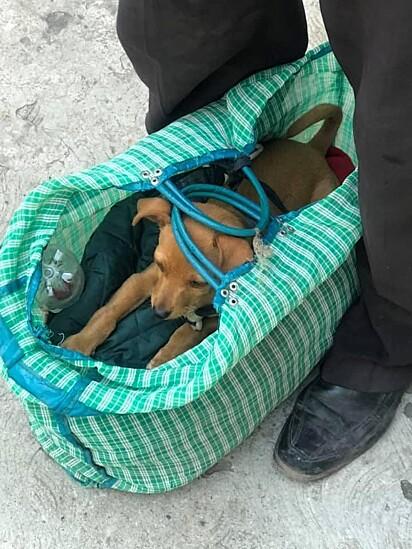 Quando o idoso encontrou o cãozinho, ele estava muito debilitado.