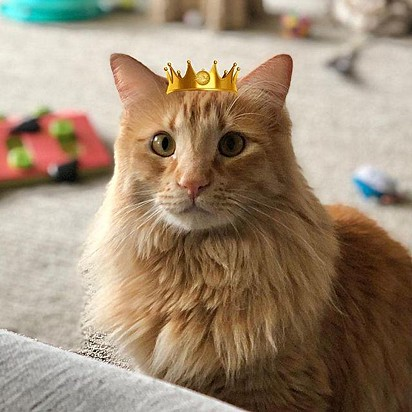 Frito se tornou um majestoso gato.