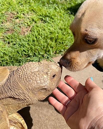 Apesar do jabuti não gostar de brincar, ele adora o seu amigo.