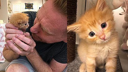 Gato resgatado com dois dias de vida e muito frágil cresce e se torna o gato mais lindo e brincalhão.