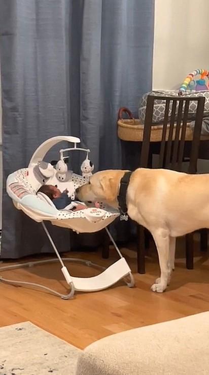 Ao ver Carter chorando, Dexter, o labrador, começa a lambê-lo para acalmá-lo.