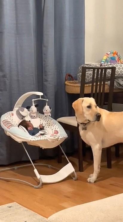 Antes de lambê-lo o cão dá uma olhadinha ao redor, certificando-se se alguém atenderia o desconforto do bebê.