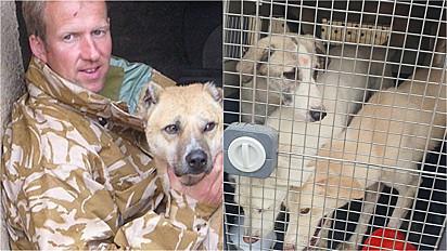 Em Operação, homem resgata mais de 200 animais no Afeganistão.