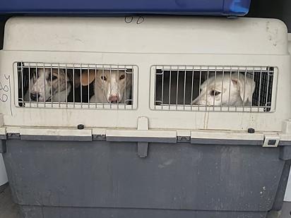 Os animais chegaram no Reino Unido neste final de semana.