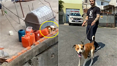 Felipe Becari e a sua equipe resgatam cachorro preso sob as intempéries do tempo.