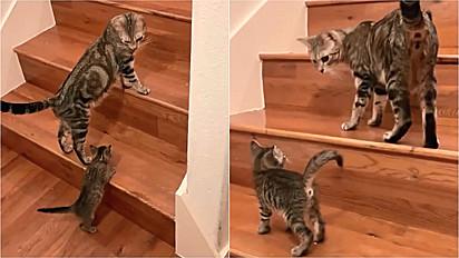 Mamãe felina ensina o seu filhote a subir as escadas.