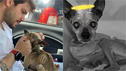 Felipe Becari presta homenagem a cachorrinho que resgatou há seis meses e veio a falecer.