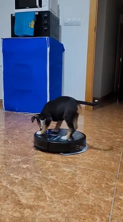 O pequeno saiu circulando com o aparelho pela cozinha.