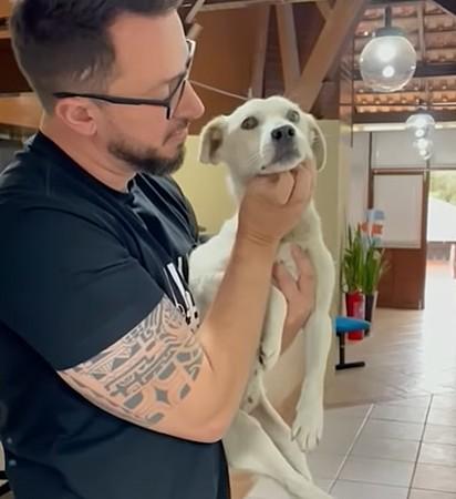 A cachorrinha segue sob os cuidados da Mari Hedler, protetora animal.