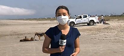Enquanto a repórter Amanda Menezes fazia a narrativa, os cães tomaram conta da praia.