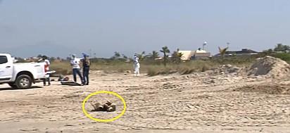 Os vira-latinhas foram flagrados se roçando na areia.