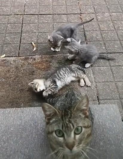 A gatinha apareceu na casa da mulher com os seus três filhotes.