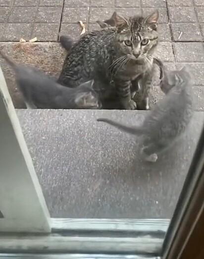 A mulher estava alimentando a felina há dias.