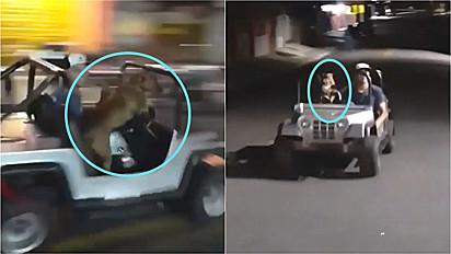 Vira-lata caramelo é flagrado dirigindo um buggy pelas ruas da sua cidade.