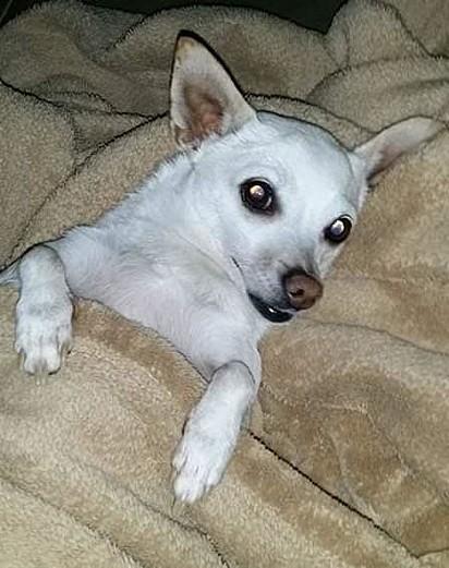A cachorrinha Prissy.