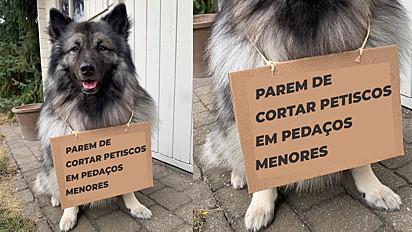Cachorro faz protesto indignado pela dona repartir o seu petisco.