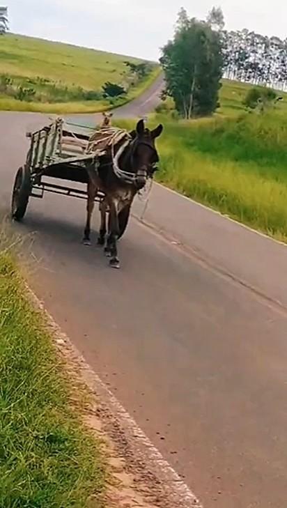 O caramelo e o cavalo foram flagrados sozinhos andando por uma das estradas de São Paulo.