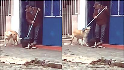 Homem é flagrado acariciando cães com a vassoura, equanto varre a calçada.