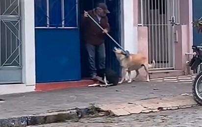 Um dos cães gostou do carinho e pediu mais.