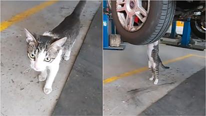 Gatinho é um dos funcionário mais fofos de mecânica.