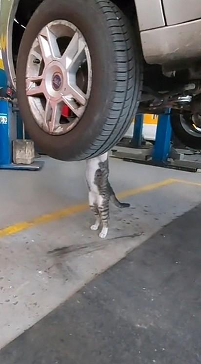 Oliver não pode ver um carro que logo quer ajudar.