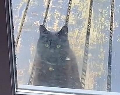 A gatinha visita diariamente o cachorrinho.