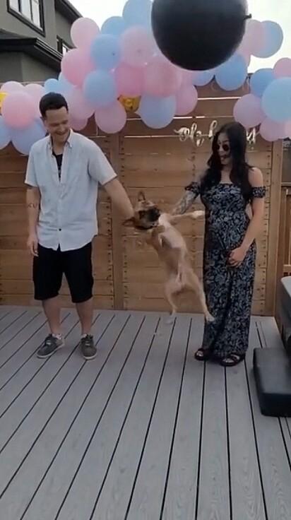 Doobie deu uma cabeçada soltando o balão da mão do casal.