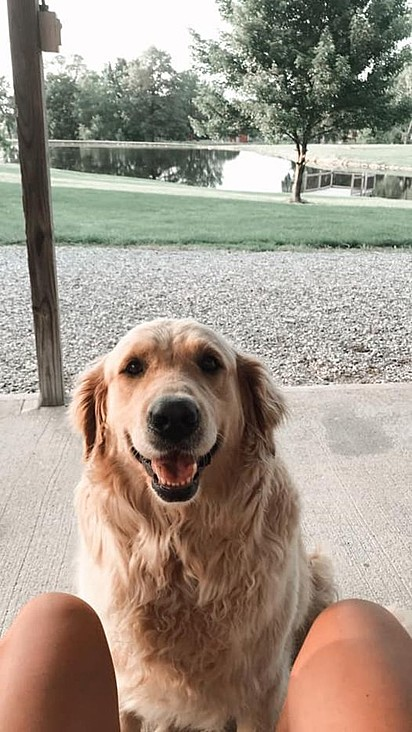 A cachorrinha Molly.