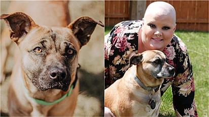 Cachorra, com o seu amor, tem ajudado dona na batalha contra o câncer.