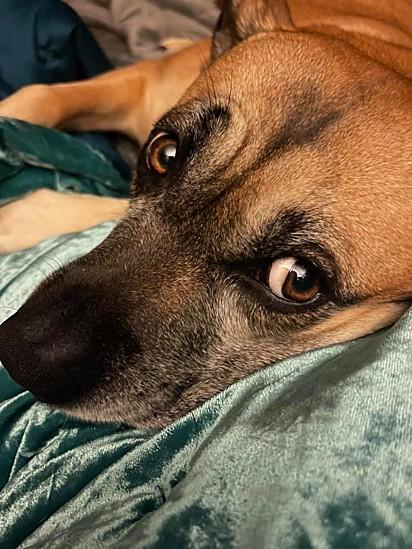 Quando Allie retorna do hospital a cadelinha não sai do seu lado.