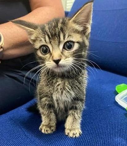 O gatinho ficará sobre os cuidados de um abrigo até que seja adotado.