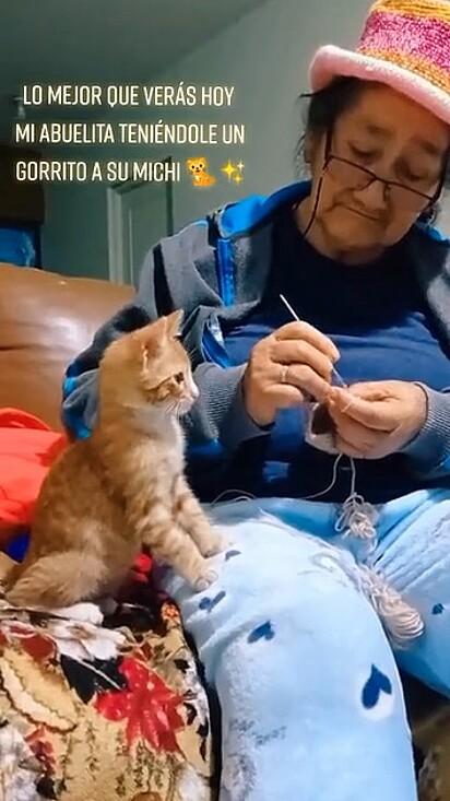 A vozinha com muito amor tricotou um chapéu para o gatinho da neta.