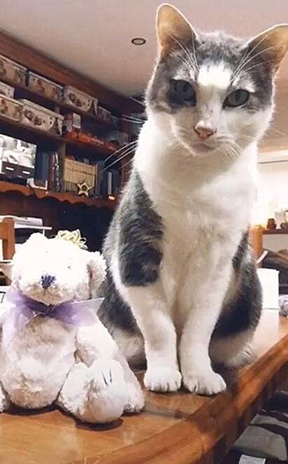 O gatinho Lucky com o seu ursinho de pelúcia.