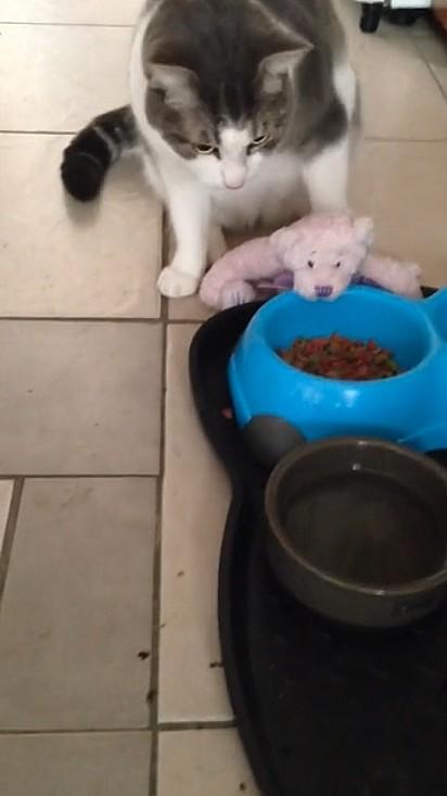 O felino se preocupou em alimentar o seu brinquedo. Amadinho!