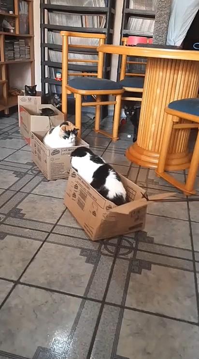 Os gatinhos puderam aproveitar uma tarde divertida ao lado do seu tutor.